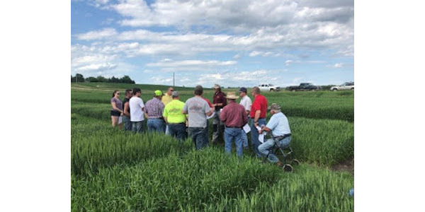 University of Minnesota Extension is offering four on-farm Small Grain Summer Plot Tours in Northern MN in July to address small grain production issues, variety performance, and insect and disease pests.(Courtesy of University of Minnesota Extension)