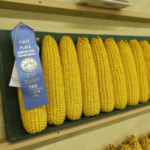 Check out the exhibitor handbook online at www.claycountyfair.com or pick one up at the Fair Administrative Offices to find the rules and guidelines to enter your work at the Fair. (Courtesy of Clay County Fair)