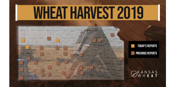 This is day 11 of the Kansas Wheat Harvest Reports, brought to you by the Kansas Wheat Commission, Kansas Association of Wheat Growers and the Kansas Grain and Feed Association. (Courtesy of Kansas Wheat)