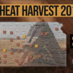 This is day 12 of the Kansas Wheat Harvest Reports, brought to you by the Kansas Wheat Commission, Kansas Association of Wheat Growers and the Kansas Grain and Feed Association. (Courtesy of Kansas Wheat)