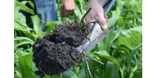 "Offering a chance to dig deeper into soil health opportunities, challenges, and monitoring, a unique educational event, ""Dirt Rich: Building Soil Health,"" is 9 a.m. to 4 p.m. Thurs., Sept. 5, starting at the Dave & Will Grommesh Farm, 18044 Hwy 34, Barnesville. (Courtesy of Sustainable Farming Association)"
