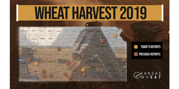 This is day 5 of the Kansas Wheat Harvest Reports, brought to you by the Kansas Wheat Commission, Kansas Association of Wheat Growers and the Kansas Grain and Feed Association. (Courtesy of Kansas Wheat)