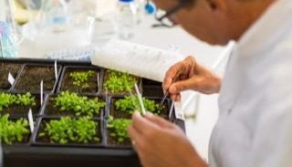 Researchers reveal plant defense toolkit
