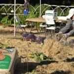 garden master gardener gardening (U.S. Department of Agriculture, Public Domain)