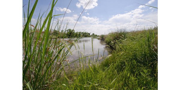 A riparian buffer offers a filtration system that is generated by mother nature. Plants work together to filtrate out pollutants that could make it into the water flow. (USDA NRCS Texas via Flickr)