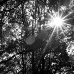 forest, sun