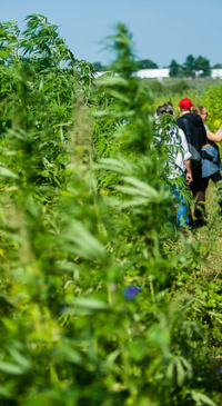 SCFB ensures hemp farmers are represented in policy discussions