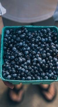 USDA will not include wild blueberries in program