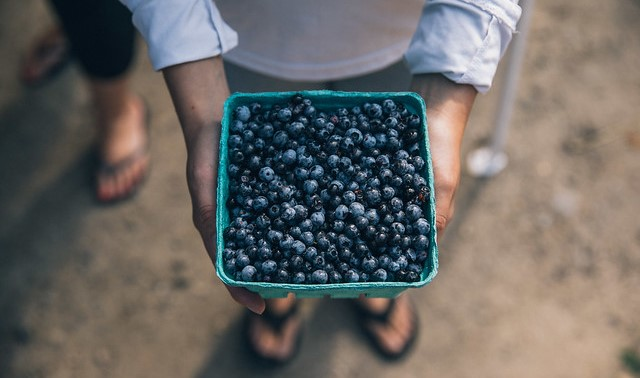 wild blueberries (Allagash Brewing, Flickr/Creative Commons)