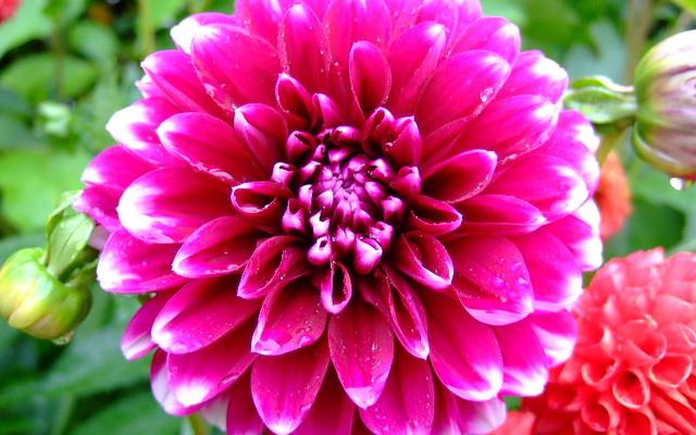 Cut Flowers Advanced Annuals Post Harvest Handling And Season