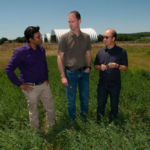 K-State researchers Krishna Jagadish (left), Barry Bradford (center) and Doohong Min talk about their upcoming project to test the digestibility of low-lignin alfalfa in dairy cows. (Courtesy of K-State Research and Extension)