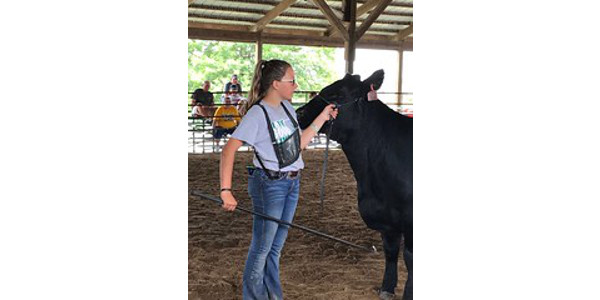 Brynn Nickle is one of 25 young Iowans who will show a steer in the annual Governor's Charity Steer Show at the Iowa State Fair. (Courtesy of Iowa Cattlemen's Association)