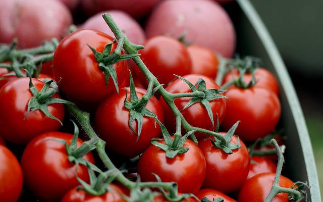 Florida farm leader applauds new tomato agreement   Morning