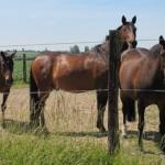 horses (LHOON, Flickr/Creative Commons)