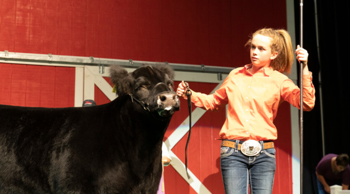Sale of Champions breaks four records   Morning Ag Clips