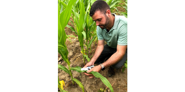 Using a chlorophyll meter can help minimize nitrogen losses and decrease costs. (Photo by Ricardo Costa, MSU Extension)