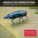 Emerald ash borer has been confirmed in Chickasaw, Franklin and Jones counties for the first time, bringing the total to 69 counties in Iowa where this invasive insect has been detected. (Courtesy of ISU Extension and Outreach)