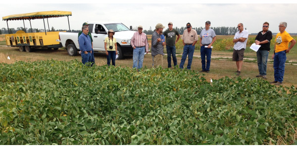 Corn, soybeans and dry edible beans will be featured at the Aug. 29 Carrington Research Extension Center row crop field tour. (NDSU Photo)
