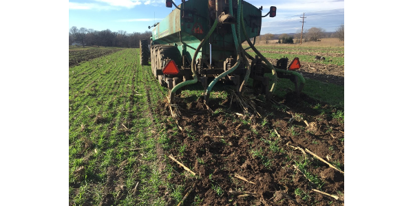 Thinking about applying manure soon on fields where short-season crops like sweet corn or peas have already come off or will be harvested in the next few weeks? Consider planting a cover crop to hold the nutrients in place this fall and next spring. (Courtesy of University of Minnesota Extension)