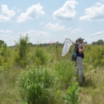 Rachel Vanausdall, a research associate at Iowa State, collects data for the Iowa Multiple Species Inventory and Monitoring program. (Image courtesy of Stephen J. Dinsmore)