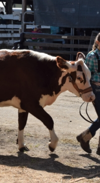 Broome County 4-H livestock members excel!