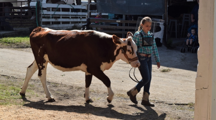 Broome County 4-H livestock members excel! | Morning Ag Clips