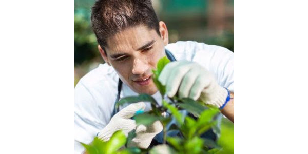 The Horticultural Research Institute (HRI) is now accepting scholarship applications for the 2019 - 2020 school year. (Courtesy of CNGA)