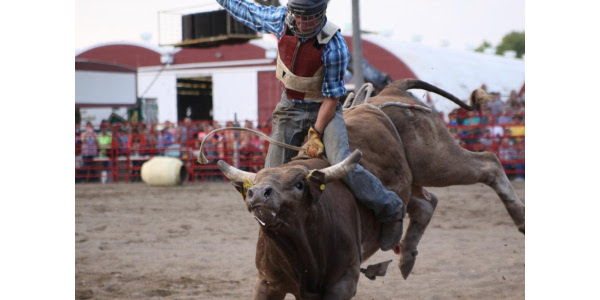 An evening of bull riding, as well as many other equine events and Muttin' Bustin', will be the featured attractions at the Outdoor Arena during the 2019 Clay County Fair, Sept. 7-15. (Courtesy of Clay County Fair)