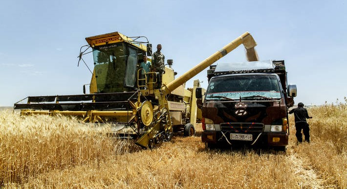 FAO: 41 countries need external assistance for food