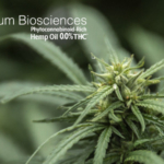 Hemp flower, THC Free. (Courtesy of Folium Biosciences via PRNewswire)
