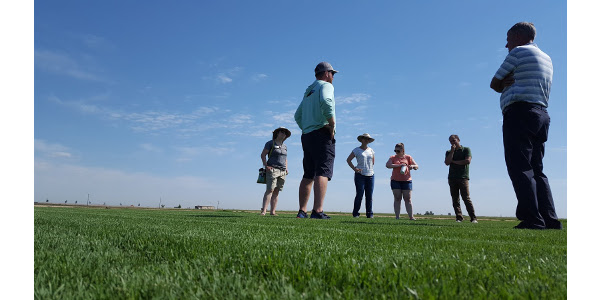 Horties at the Green Valley Turf in Platteville. (Courtesy of Alison O'Connor, Larimer County Extension)