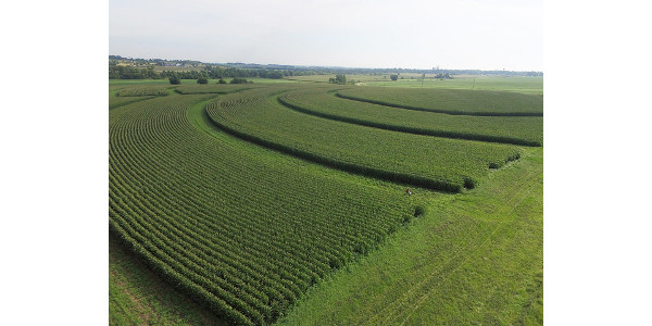 Prairie Strips on Larry and Margaret Stone's farm near Traer, IA. Strips were frost seeded in January 2016 and this photo was taken in July 2017 showing the first year of growth. (NRCS/SWCS photo by Lynn Betts via Flickr)