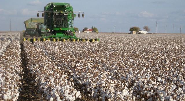 USDA permits storage of cotton outside