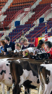 Premier National Junior Brown Swiss Show results