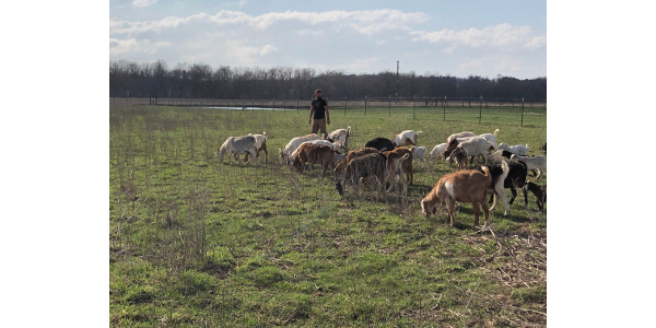 Adam Ledvina will share why and how he raises Kiko goats to meet his goals of ecological restoration and profitability. (Courtesy of Practical Farmers of Iowa)