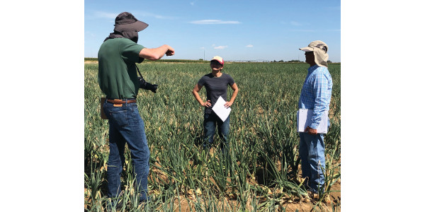 Participants of the 2019 Northern Colorado Onion Variety Field Day on Sept. 5 got the chance to check results of 39 variety trials in the Sakata Farms' onion fields in Brighton, Colo. (Courtesy of National Onion Association)