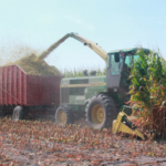 Corn silage is a forage too! Producers looking for options to market other forage crops including corn silage are encouraged to use the Michigan Hay Listing Network. (Photo by Phil Kaatz, MSU Extension)