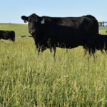 This six-page publication summarizes the findings of that evaluation to determine the changes in Iowa's pasture management and to look at the effectiveness of IBC's various pasture programs. (Courtesy of ISU Extension and Outreach)