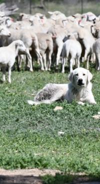 Livestock predator program set Sept. 17
