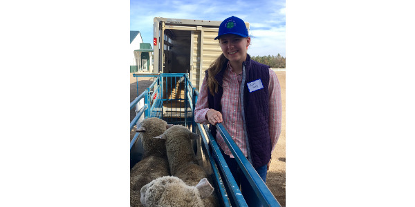 Faith Norby of Killdeer, N.D., picks up her Starter Flock Program sheep. (NDSU photo)