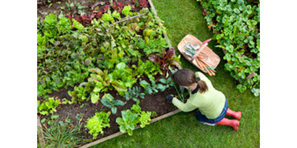 The Missouri Department of Agriculture has announced up to $50,000 will be available for the Urban Agriculture Matching Grant Program. (Courtesy of Missouri Department of Agriculture)