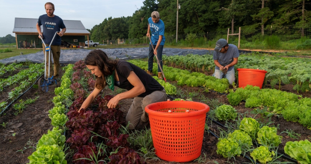 Finding farmland: Resources to support land access