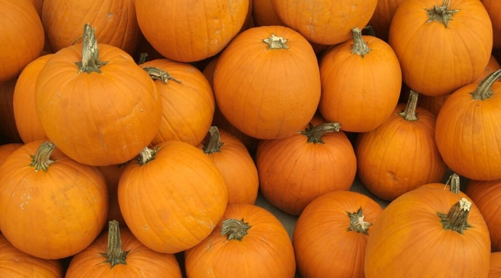 Pumpkins Are For Carving Eating And Decorating Morning Ag Clips