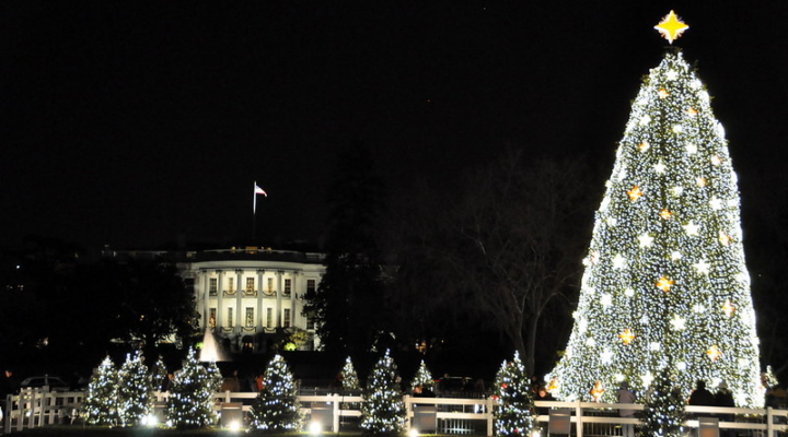 National Christmas Tree 2019.Northumberland County Tree Farm Provides White House