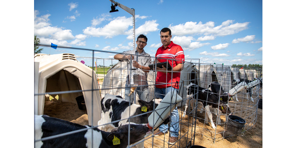 João Dórea, assistant professor of dairy science (right), and animal sciences graduate student Arthur Fernandes set up a camera over a calf hutch at Arlington Agricultural Research Station in Arlington, Wis. (Photo by Michael P. King)