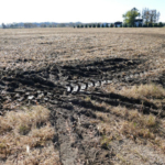 Another wet fall means that harvesting crops from saturated fields could lead to compaction issues. (Image credit: Paul McDivitt/University of Minnesota Extension)