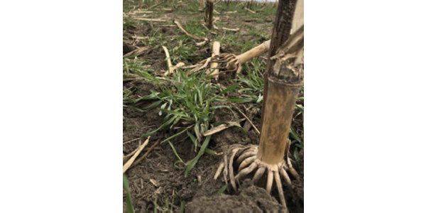 The CTC is more than reduced tillage, it provides information and research on all aspects of soil health. (Screenshot from flyer)