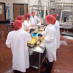 Students package freshly made cheese curds in the UWRF Dairy Pilot Plant in 2018. (Courtesy of UW-River Falls)
