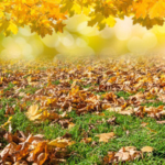 Homeowners must decide when and how to remove fallen leaves before the Iowa winter freezes them in place. Iowa State University Extension and Outreach horticulturists respond to questions about removing and using autumn leaves. (Photo credit: andreusK/stock.adobe.com)