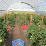 A high tunnel short course will be held at Reiman Gardens on the Iowa State University campus Nov. 4, from 8:30 a.m. to 3 p.m. (Courtesy of ISU Extension and Outreach)